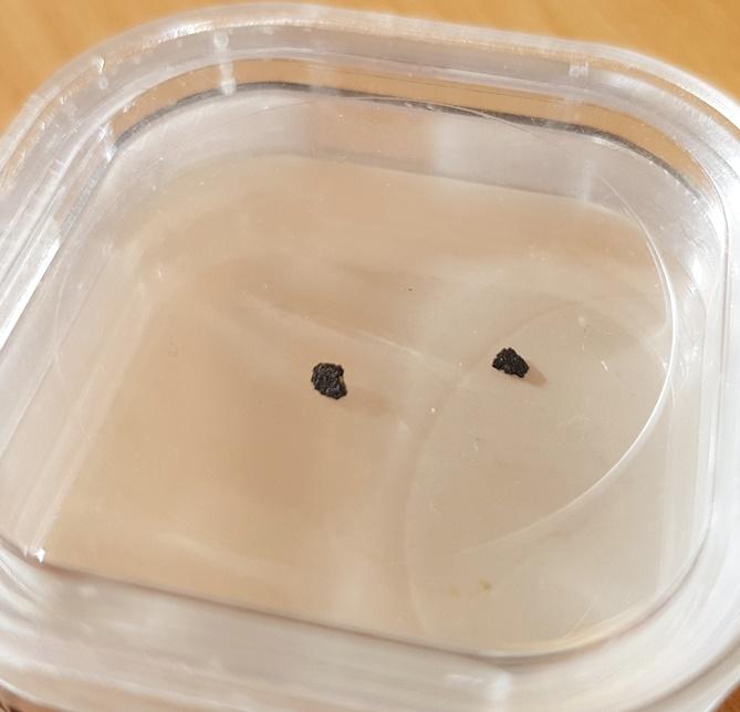 Orgueil meteorite